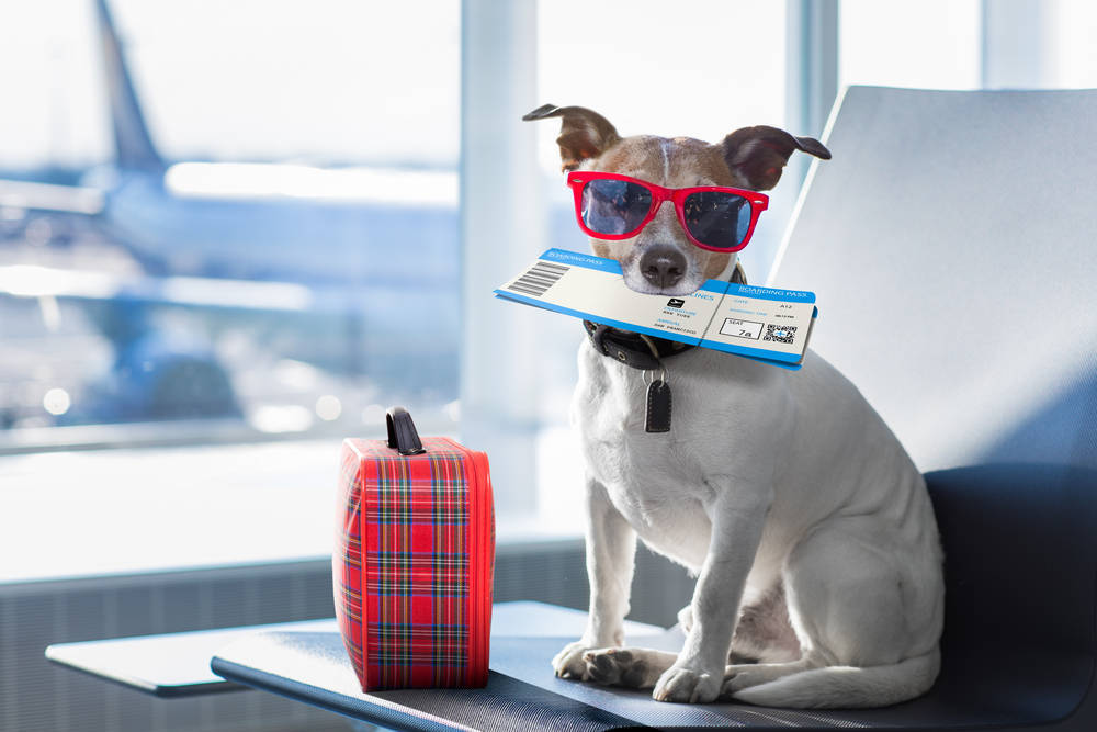 Me voy de vacaciones: ¿Qué hago con mi mascota?